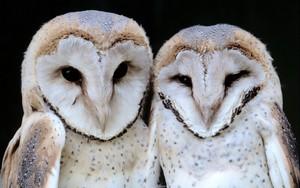 納屋 Owls