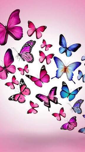 Butterfly 🦋🦋