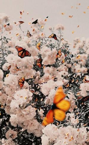 Butterfly(s)