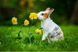 Cute  bunnies??