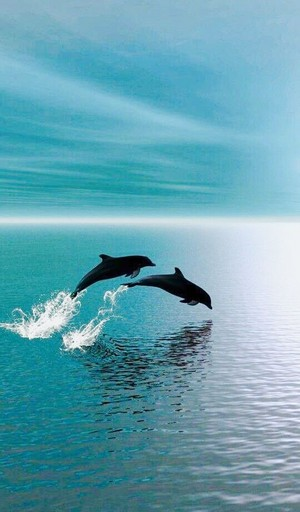 Dolphins🐬