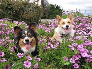Happy Springtime Sunny and Kleks🌷
