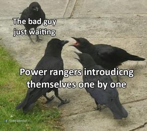 Power Ranger birbs