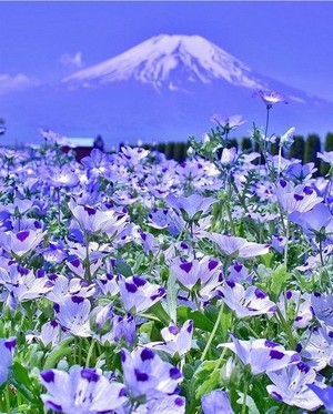 Spring vibes🌷🌞🐝