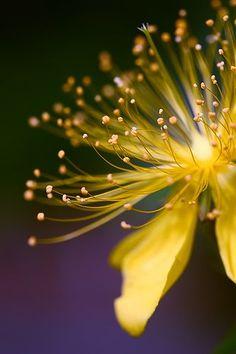 bunga aesthetic🌺🌷🌸