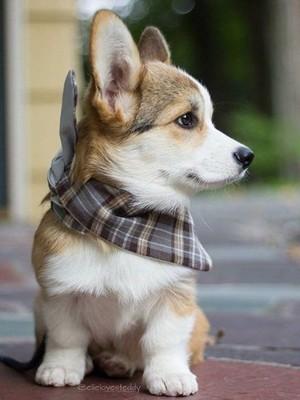 so sweet dog puppies🐶🐾❤️
