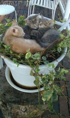 sweet cats😻💖