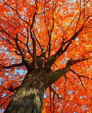 Autumn оранжевый Aesthetic 🧡
