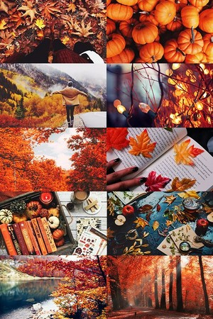 Autumn aesthetic🍃🍁
