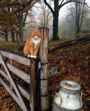 Autumn on the farm 🌾