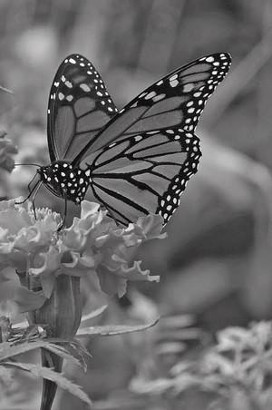 Black and white Fotografi