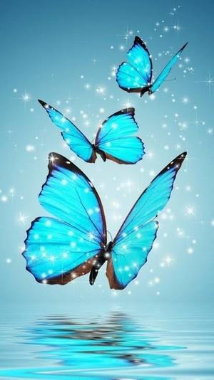vlinder 🦋🦋