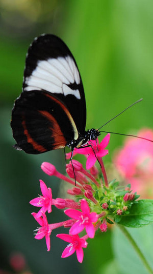 con bướm, bướm 🦋🦋
