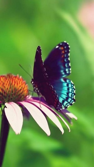 бабочка 🦋🦋