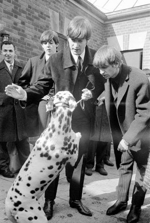 Even Dogs Like The Beatles! 🐶