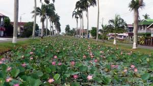 Nieuw Nickerie, Suriname