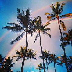 Palm Trees Under Colorful Sky