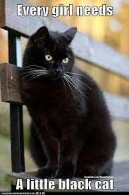 Quote Pertaining To Black kucing