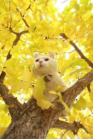 RainSoul as a cat.