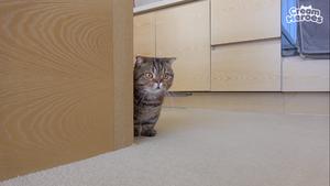SeanTheHedgehog As A Cat