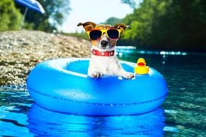 cute summer dogs🐶