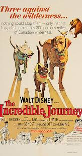 Movie Poster 1963 Disney Film, The Incredible Journey