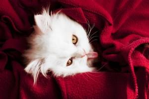 kitten cuties 😻💖