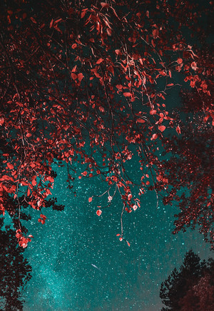 🍂🌙Autumn Nights🍂🌙