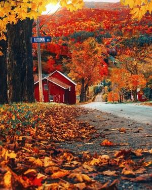Autumn Vibes 🍁🍂✨