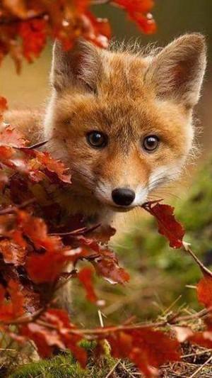Autumn cuties🍂🧡🎃
