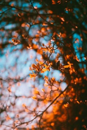 Autumn vibes 🍁🍂🦋