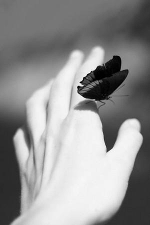 Black and white paruparo