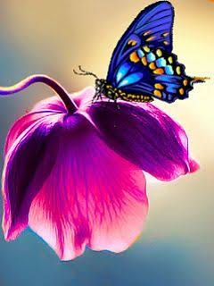 borboleta 🦋🦋