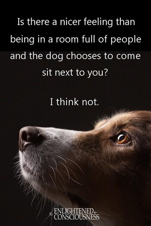 doggy quote