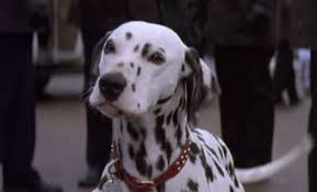 Perdita 1996 Disney Film, 101 Dalmatians
