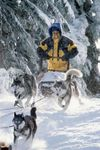 Snow 狗