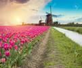 Current: Netherlands