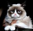 5. Grumpy Cat