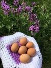 Eggs in nature.