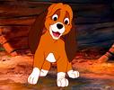 ★ I like him better as a cucciolo ★