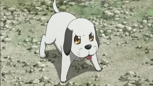 What's this dog's name?