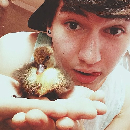 What is JC's duckling's name?