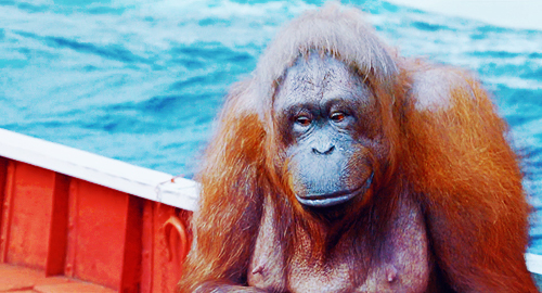What is the name of the orangutan the life of pi trivia for Orange juice life of pi