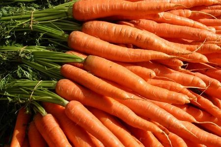 Carrot is a..