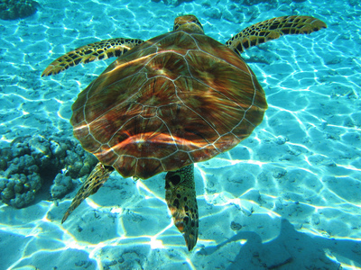 Which is the island of the Ionian Sea where the protected species Caretta-Caretta (sea turtle) lays its eggs?