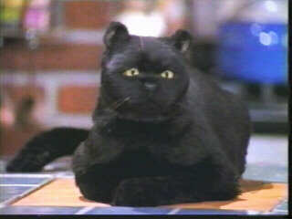 Sabrina The Teenage Witch Cat