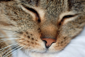 What is the moisture on a cats nose made out of?