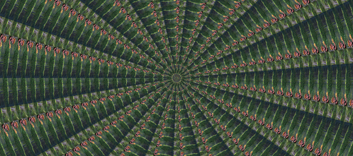 Who is in this kaleidoscope?