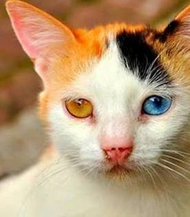 This cat shares the same eye color as who?