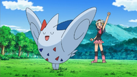 Which Contest did Dawn's Togekiss make her first appearance under Dawn's ownership?